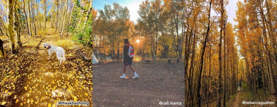 2020 Gold Rush | Best of Fall Leaf Photos in Park County, Colorado