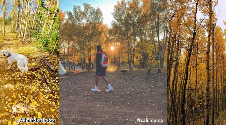 2020 Gold Rush   Best of Fall Leaf Photos in Park County, Colorado