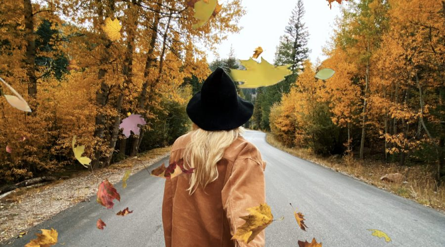 Best Places for Leaf Peeping and to See Fall Colors in Park County, Colorado